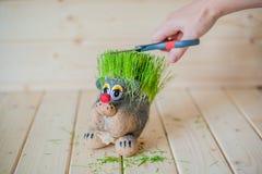 Coupe de cheveux, hérisson avec des aiguilles d'herbe Photographie stock