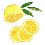 Coupe de citron dans l'ensemble de clipart (images graphiques) de tranches Illustration tirée par la main d'aquarelle illustration stock