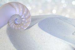 Coupe de coquille de Nautilus photo libre de droits