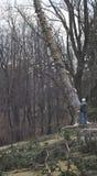 Coupe de l'arbre photographie stock libre de droits