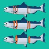 Coupe de Salmon Fish Vector Photos stock