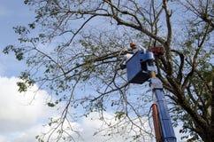 Coupe de travailleurs, pruneau et branches d'arbre de narra d'équilibre avec la tronçonneuse utilisant le telehandler avec le sea photos libres de droits