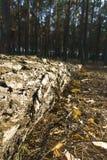 Coupe des arbres Rondins sci?s se trouvant sur l'herbe Nettoyage du parc de vieux, malades arbres images stock