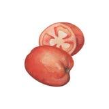 Coupe entière et demi de tomate mûre Peinture rouge juteuse d'aquarelle de tomate sur le fond blanc Images stock