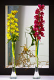 The coupe of orchids in vases Stock Photography