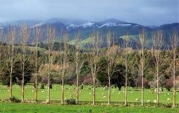 Coupe-vent du Nouvelle-Zélande Images stock