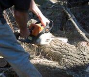 Couper l'arbre Image libre de droits