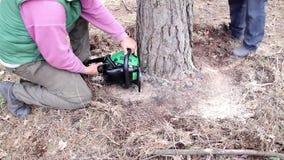 Coupes de bûcheron un arbre à la terre par une tronçonneuse clips vidéos