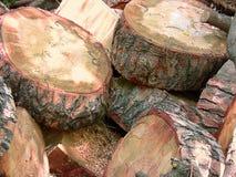 Coupes de détail de tronc d'arbre Photo libre de droits