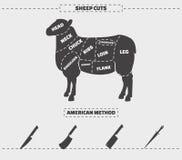 Coupes de viande d'agneau illustration stock