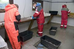Coupeurs de poissons Images stock