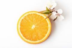 coupez en tranches les agrumes oranges mûrs d'isolement sur le fond blanc Photographie stock libre de droits