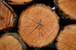 Coupez et avez empilé le plan rapproché de rondins de bois de chauffage Image stock