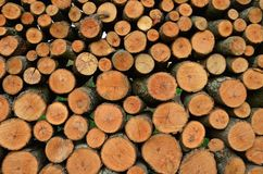 Coupez et avez empilé les rondins de bois de chauffage Image libre de droits