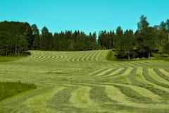 Coupez fraîchement l'herbe dans les lignes photo stock