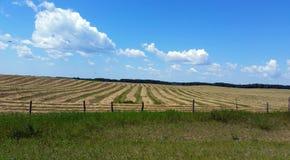 Coupez fraîchement le champ du foin dans Manitoba du sud photo stock