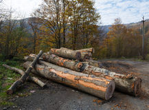 Coupez fraîchement les rondins d'arbre Photo stock