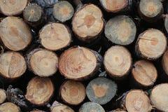 Coupez fraîchement les rondins d'arbre a empilé le paysage automnal Images libres de droits