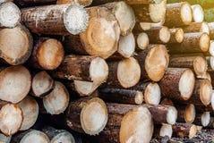 Coupez fraîchement les rondins de pin empilés dans la forêt notant, déboisement, problèmes environnementaux photos libres de droits