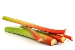 Coupez frais les cheminées de la rhubarbe Photographie stock