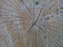 coupez l'arbre Photos libres de droits