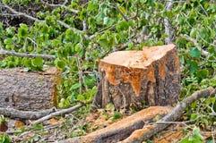 Coupez l'arbre Images libres de droits