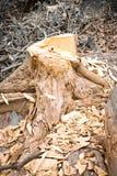 Coupez l'arbre Photographie stock