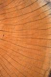Coupez l'extrémité d'un log superficiel par les agents images stock