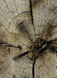 Coupez l'extrémité du bois Image libre de droits