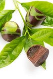 Coupez la sucrerie faite main avec le ganache de chocolat et chaulez le remplissage de gelée image libre de droits