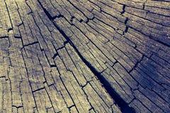 Coupez la surface de tronçon d'arbre comme fond images stock