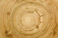 Coupez la texture de fibre de bois de logarithme naturel Photographie stock