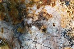 Coupez la texture de vieux rondins Image libre de droits