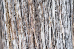Coupez la texture en bois de logarithme naturel Photo stock
