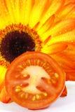 Coupez la tomate devant le tournesol Photo stock