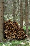 Coupez le bois Image libre de droits