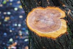 Coupez le bokeh trouble de fond d'arbre image libre de droits