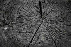 Coupez le fond en bois de texture Image stock