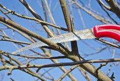 Coupez le jardin de branche de pommier de pruneau au printemps avec la scie à main photographie stock libre de droits