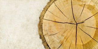 Coupez le logarithme naturel panoramique Images libres de droits