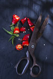 Coupez le poivron rouge photo stock