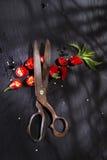 Coupez le poivron rouge photos stock