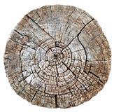 Coupez le tronçon en bois de tronc ou d'arbre image libre de droits