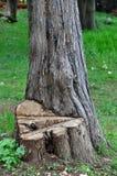 Coupez le tronc d'arbre Image libre de droits