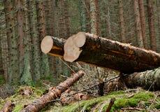 Coupez les arbres dans la forêt Photo stock