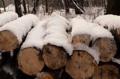 Coupez les arbres dans une forêt Photos libres de droits