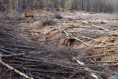 Coupez les arbres dans une forêt images stock