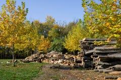 Coupez les arbres forestiers photos stock