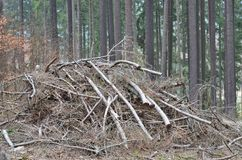 Coupez les branches d'arbre équilibrées, Bohême du sud photos stock