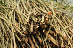 Coupez les branches d'arbre Image stock